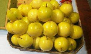 黄金百香果作为网红水果,可谓是百香果的贵族,卖价也高,成为了近几年热门水果种植项目,但是期间很多种植户盲目跟风种植!以致于产量普遍偏低、品种乱而杂、鲜果质量参差不齐等诸多问题,行业健康发展不规范!今天百香果之家就先来聊聊品种的问题,究竟黄金百香果有多少个品种?